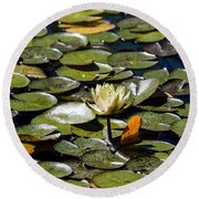 Water Lily And Bees Round Beach Towel