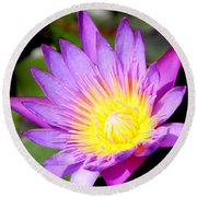 Water Lily In Purple Round Beach Towel