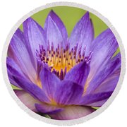 Water Lily Lindsey Woods Macro Round Beach Towel