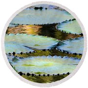 Water Lily Pads In The Morning Light Round Beach Towel