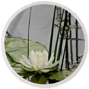Water Lily Pictures 48 Round Beach Towel