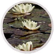 Water Lily Pictures 64 Round Beach Towel