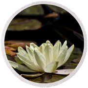 Water Lily Pictures 67 Round Beach Towel