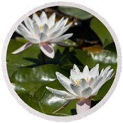 Water Lily Pictures 75 Round Beach Towel