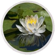 Water Lily Reflection Round Beach Towel