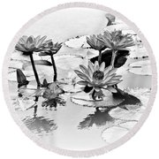 Water Lily Study - Bw Round Beach Towel