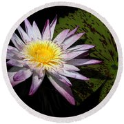 Water Lily With Lots Of Petals Round Beach Towel