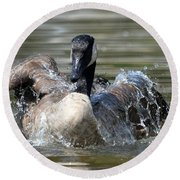 Water Logged - Canadian Goose Round Beach Towel