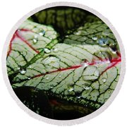 Water On The Leaves Round Beach Towel