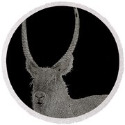 Waterbuck B W Abstract Round Beach Towel