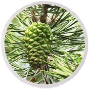 Watercolor Of Ripening Pine Cone Round Beach Towel