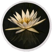 Waterlilly 6 Round Beach Towel