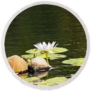 Waterlily And Coconuts Round Beach Towel