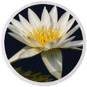 Waterlily And Pad Round Beach Towel by Susan Candelario