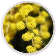 Wattle Flowers Australian Native Round Beach Towel