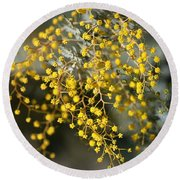Wattle Flowers Round Beach Towel