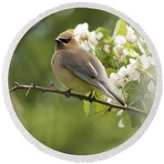 Waxwing In A Dream Round Beach Towel