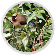 Waxwing Meal Round Beach Towel