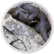 We Otter Snuggle Up Round Beach Towel