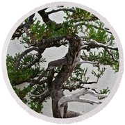 Weathered Bonsai Round Beach Towel