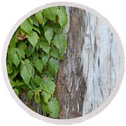 Weathered Tree Trunk With Vines Round Beach Towel