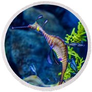 Weedy Seadragon Round Beach Towel