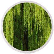 Weeping Willow Tree Enchantment  Round Beach Towel