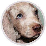Weimaraner Dog Art - Forgive Me Round Beach Towel by Sharon Cummings