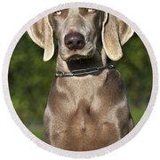 Weimaraner Hunting Dog Round Beach Towel
