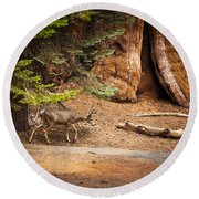 Welcome Home - Sequoia National Forest Round Beach Towel