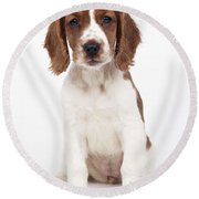 Welsh Springer Spaniel Dog Round Beach Towel
