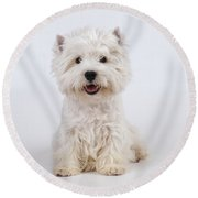 West Highland White Terrier Dog Round Beach Towel