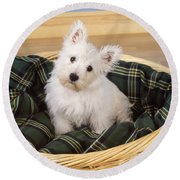 West Highland White Terrier Puppy Round Beach Towel