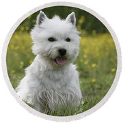 West Highland White Terrier Round Beach Towel