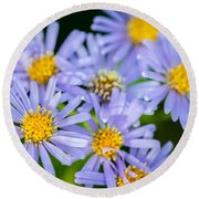 Western Daisies Asters Glacier National Park Round Beach Towel