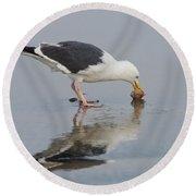Western Gull Eats Clam Round Beach Towel