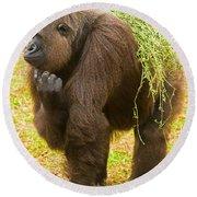 Western Lowland Gorilla Female Round Beach Towel