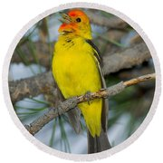 Western Tanager Singing Round Beach Towel