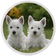 Westie Puppies Round Beach Towel