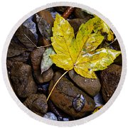 Wet Autumn Leaf On Stones Round Beach Towel