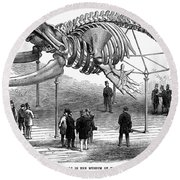 Whale Skeleton, 1866 Round Beach Towel