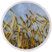 Wheat Standing Tall Round Beach Towel