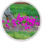 Where Petunia Grows Round Beach Towel