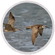 Whimbrels Flying Above Beach Round Beach Towel