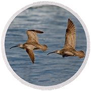 Whimbrels Flying Close Round Beach Towel