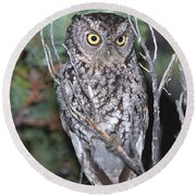 Whiskered Screech Owl Round Beach Towel