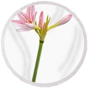 White Amaryllis Flower Round Beach Towel