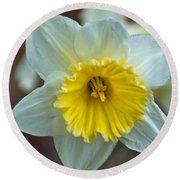 White And Yellow Daffodil Round Beach Towel