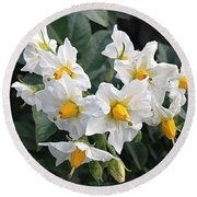 Garden Blossoms White And Yellow Garden Blossoms Round Beach Towel