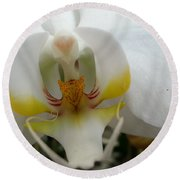White And Yellow Orchid Round Beach Towel